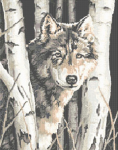 Wonderful cross stitch pattern of a wolf in winter setting.