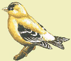 Free cross stitch pattern of a goldfinch bird. The chart contains only full stitches.