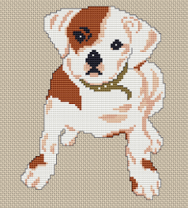 Small bulldog puppy in brown and beige colors. Every dog has his day, unless he loses his tail, then he has a weak-end.