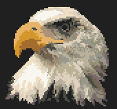 The bald eagle, national bird of the United States