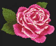 Purple Rose pattern