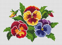Pansies - the old-fashioned favorite flowers that are always popular.